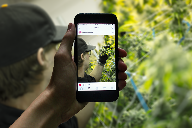 12 Ways to Optimize Your Cannabis Social Media Account on